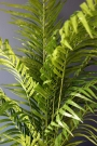 Faux Potted Areca Palm