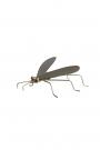 Brass Fly Ornament