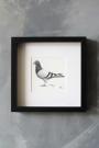 Pigeon Post Messenger - Bring More Wine. X Art Work By Brigitte Herrod