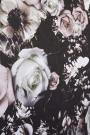 Rockett St George Flower Power Wallpaper - Blush