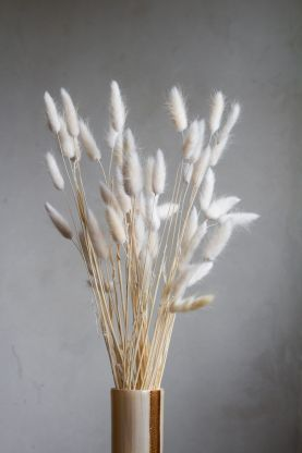 Image of the Bunch Of Lagarus Ovatus - Off White
