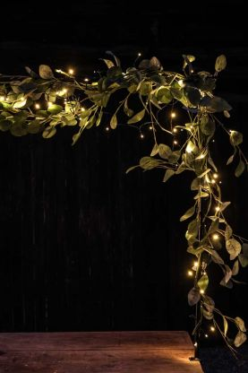 Image of the Multifunction Solar Fairy Lights - 10m entwined in foliage