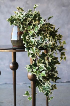 lifestyle image of Faux Variegated Ivy Plant on metal side table and distressed grey wall background