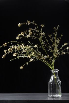 Image of the Faux Wild Green Stem With White Florals on a dark background