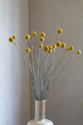 Image of the 20 Stems Of Dried Mustard Pom Poms in a vase