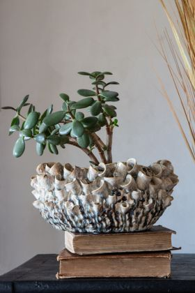 Image of the Coral Plant Pot / Storage Bowl sat on some books with a plant in it