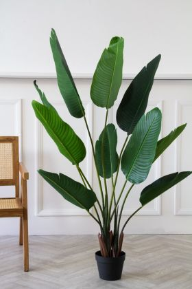 Image of the Faux Banana Tree