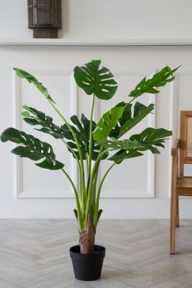 Image of the Faux Monstera Cheese Plant