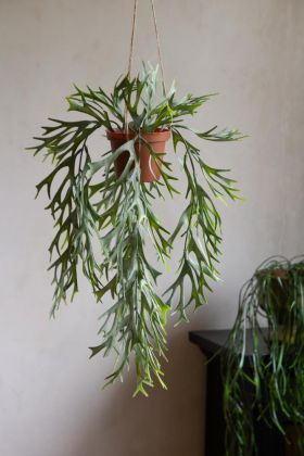 Lifestyle image of the Faux Stag Fern Artificial Plant In Hanging Pot