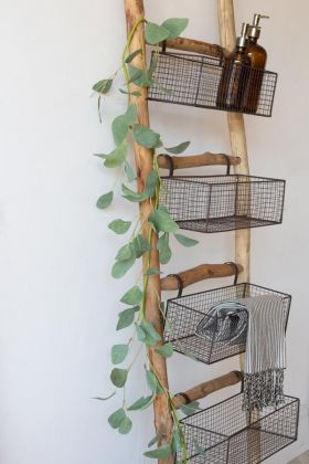 Image of a single vine leaf wrapped around a ladder