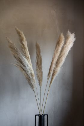Close-up lifestyle image of the Natural Five Piece Pampas Grass Stems in a vase