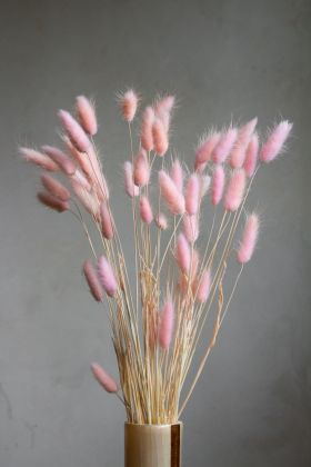 Image of the Bunch Of Lagarus Ovatus - Blush Pink
