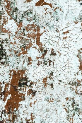 Feathr Safari Wallpaper by Kiki Slaughter - Bronze - ROLL