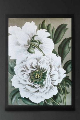 Image of Snow White Wild Rose Art Print Poster framed and hanging on a wall white flower with green background on dark wall
