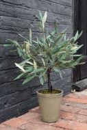 Lifestyle image of the Faux Olive Tree In Ceramic Flower Pot