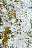 Feathr Safari Wallpaper by Kiki Slaughter - Gold - ROLL