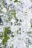 Feathr Safari Wallpaper by Kiki Slaughter - Patinated Green - SAMPLE