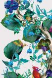 detail image of Osborne & Little Rain Forest Wallpaper - Green W7026-01 - ROLL green and blue leaves on brown branch with coloured birds on white background repeated pattern