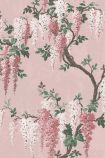 detail image of the Wisteria Pink Bloom Wallpaper by Pearl Lowe pale pink and dark pink wisteria flowers with green leaves on brown branches with pink background